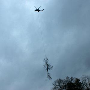 Bergung des Baumes mit Hubschrauber