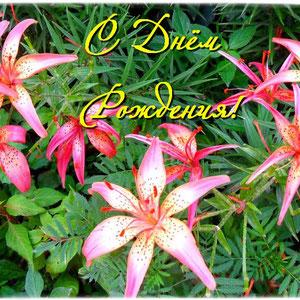 Лилии розовые _С Днём Рождения