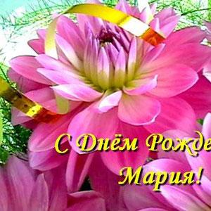 С Днем Рождения, Мария_георгин розовый