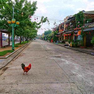 Ein Hahn streift im Morgengrauen unbehelligt durch die bunt geschmückten Straßen von Hoi An. Die Touristen schlafen, das Frühstücksbuffet wird noch angerichtet, die Reisebusse warten in den Garagen