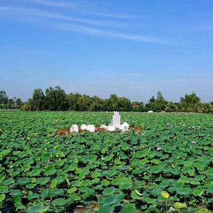 Eine Grabstelle inmitten eines Lotus-Teiches