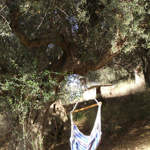 Hängesessel im Olivenbaum