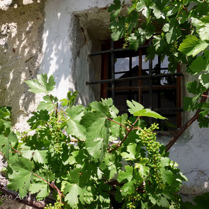 Weinfassade  ( 16 Jhd. )