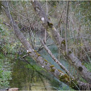 Pfynwald 01.10.2012