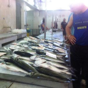 Fischmarkt in Zadar