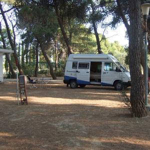 Im griechischen Zikadenwald