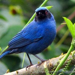 Kolumbien - eines der artenreichsten Länder an Vögeln