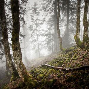 Nebelmooswald