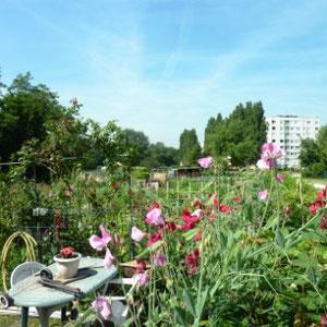 Ceinture verte d'Ile de France : jardins ouvriers - Au Bout des Pieds