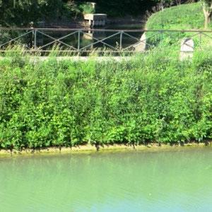 Grand-Morin : canal de Meaux à Chalifer, passant par dessus le Morin - Au Bout des Pieds