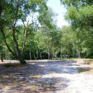 Ceinture verte d'Ile de France : forêt de Montmorency - Au Bout des Pieds