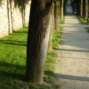 Ceinture verte d'Ile de France  - Au Bout des Pieds