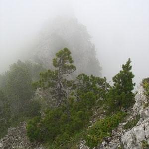 Arcalod (Bauges, 73) : crête nord - AU BOUT DES PIEDS