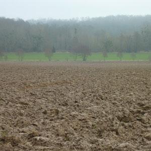 bois de Saint-Laurent - AU BOUT DES PIEDS