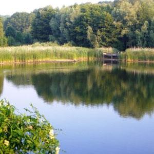 Ceinture verte d'Ile de France : forêt de Bondy - Au Bout des Pieds