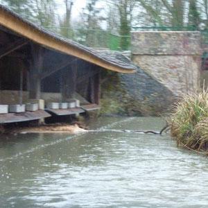 lavoir et pont d'Esternay - AU BOUT DES PIEDS