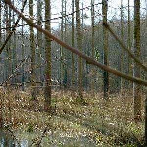 l'Aubetin, Bois Charmel, sous La Malgagne - AU BOUT DES PIEDS