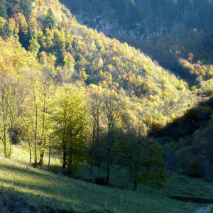 Pécloz (Bauges, 73) : vallon de ND de Bellevaux - AU BOUT DES PIEDS