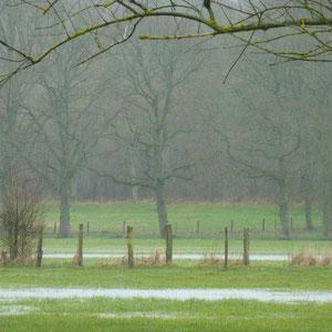 zone humide entre le Morin et les Auges - AU BOUT DES PIEDS