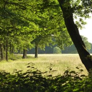 Ceinture verte d'Ile de France : forêt Notre Dame - Au Bout des Pieds