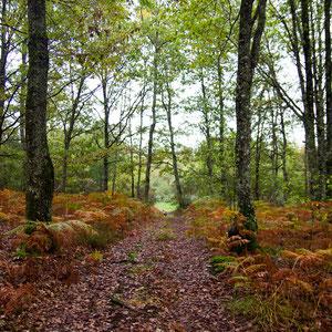 Bois du Magnet (Mers-sur-Indre)