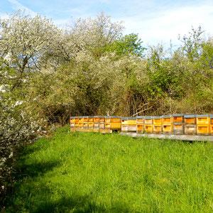Bienenstandort bei Neukirchen-Balbini