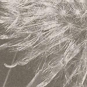 Артикул: Taraxacum Состав: Тревира на флизелиновой основе Ширина: 200 см Длина: 280 см