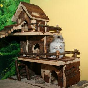 Onyx mein erster Hamster