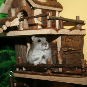 Hamster Onyx sitzt auf der Terrasse :-)