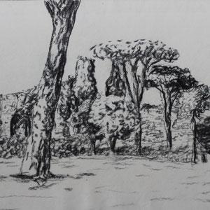 """""""Rom: Caracalla Thermen"""" Bleistiftzeichnung nach der Natur, 20 x 30cm, 2010"""