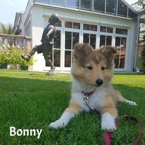 Bonny vom Aitrachtal