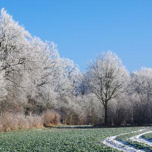 Winterkleid, Winterwald, Wohltorf