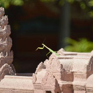 Gottesanbeterin im Modell von Angkor Wat