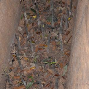 man beachte die bambusspitzen. Wer hier rein gestürzt ist..........