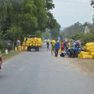unterwegs wird überall Reis verladen