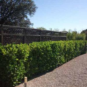 Mantenimiento de jardines en Collado Mediano