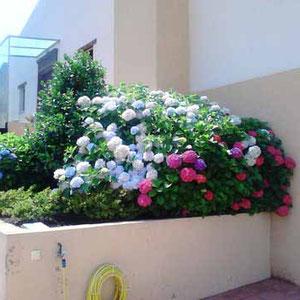 Mantenimiento de jardines en la Comunidad de Madrid