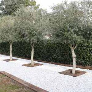 Mantenimiento de jardines en las Matas