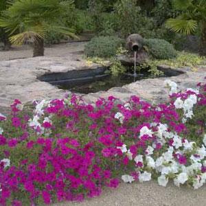 Mantenimiento de jardín en Guadarrama