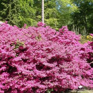 Graal-Müritz Rhododendronpark