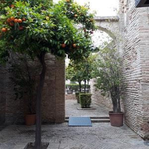 Orangenbaum, Innenhof, Alcazar, Jerez de la Frontera, Spanien