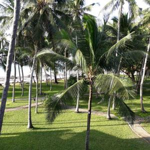 Garten, Hotel Diani Sea Resort, Diani Beach, Südküste Kenia, Afrika