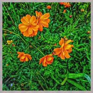 · motiv-untersetzer · set 14.4 · motiv:  orange_blumen  ·  2011-07-26-011  ·  yak © 2011 RK