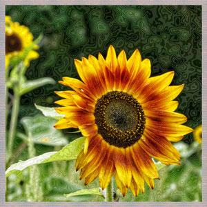 · motiv-untersetzer · set 14.3 · motiv:  sonnenblume  ·  2014-06-21-019  ·  yak © 2014 RK