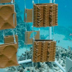 Frisch installiert: Die Test- Strukturen vor dem «MaRHE»- Forschungszentrum auf den Malediven zeigen, dass sich die erhofften Mikroorganismen ansiedeln.