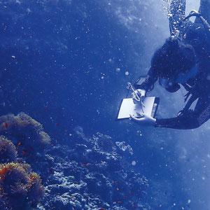 Biodiversität, aber nicht nur: Riffe schützen Küstenlinien vor Erosion und sind bedeutend für Tourismus und Fischerei.