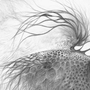 Free process - « Ce qui vient comme ça vient / What comes as it comes » - Crayon papier sur toile - 80 x 80 cm —  © Franck Chastanier 2019 -  - Prix : 800 Euros