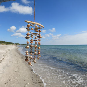 Muschelwindspiel aus hellbraunem Treibholz und dazu passenden braunen Muscheln.