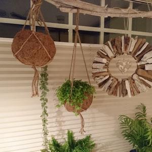 Fensterdekoration mit Grünpflanzen und Treibholzsonne