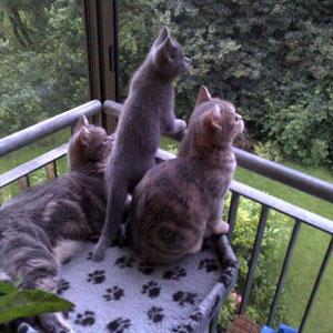 im Park tut sich was Interessantes (und keine Sorge: da ist ein katzentaugliches Insektennetz montiert)